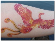 phoenix-tattoo-designs-26