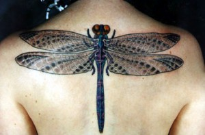 1228408417_2728099_1190638306_dragonfly_by_glassbeetle